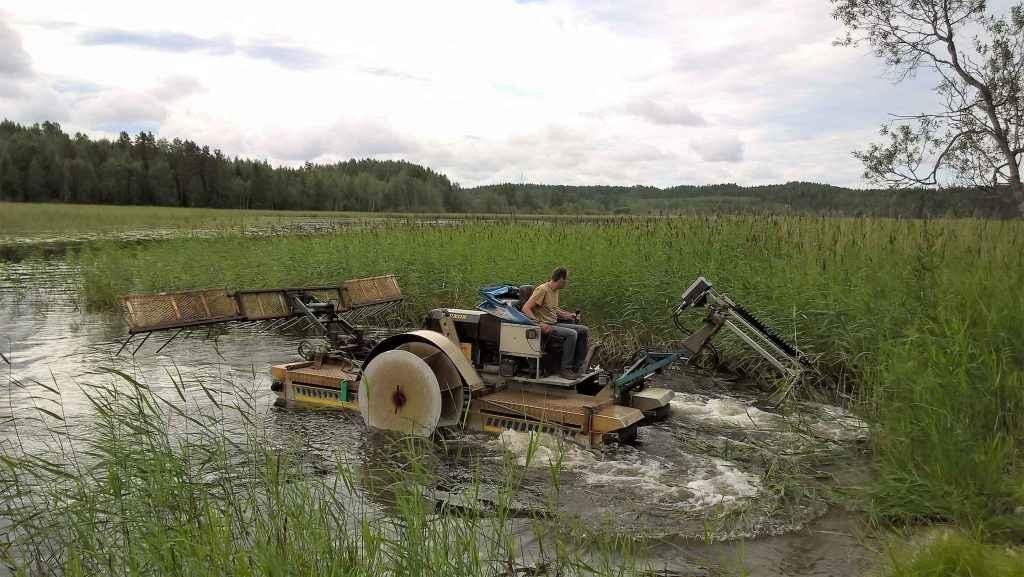 Kelluva niittokone niittää ruovikkoa Uskinlahdella kesällä 2016