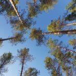 Metsäretki hiilensidonnan mallikohteille Uttiin 13.10.2021